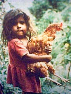 Small girl with large hen