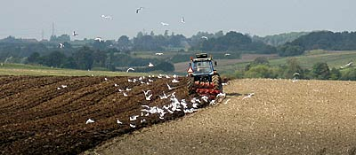 Plough the field